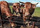 W Australii wystawiono na sprzedaż największą posiadłość rolną na świecie