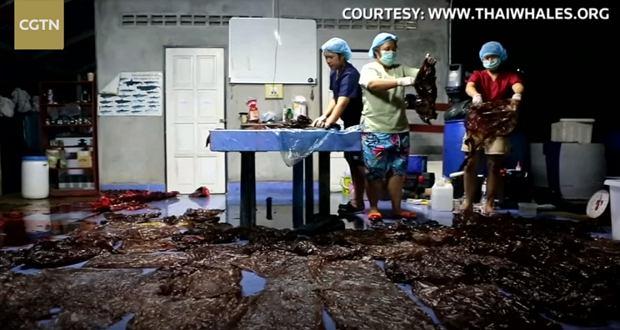 Wieloryb umarł po połknięciu 80 plastikowych toreb