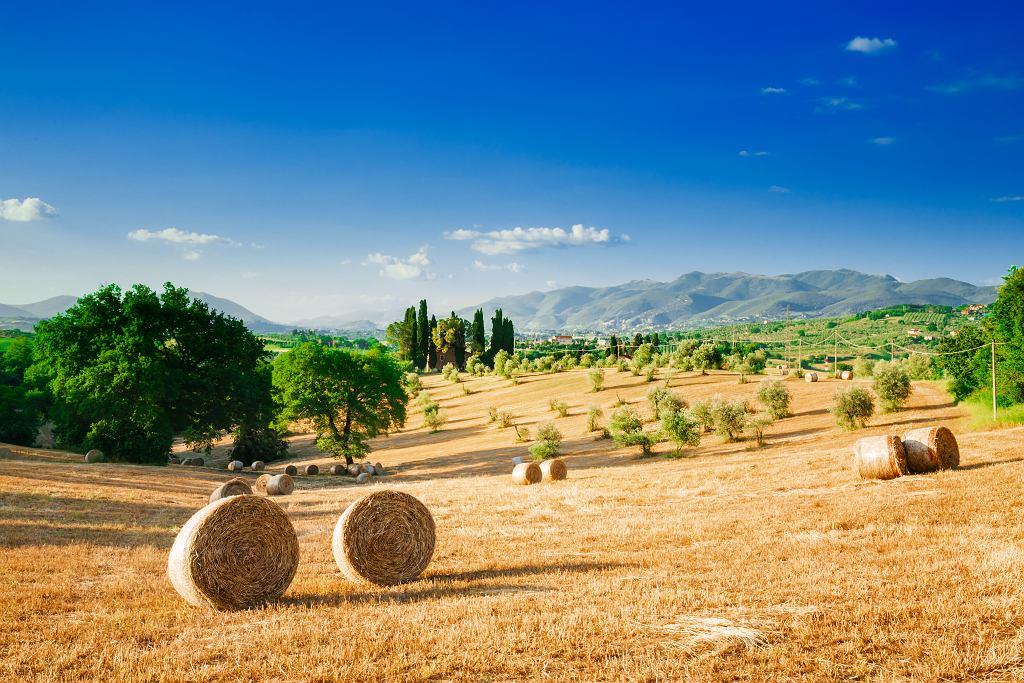 Przysłowia o lecie często nawiązują do życia na wsi. Zdjęcie ilustracyjne, bizio_ti/shutterstock.com