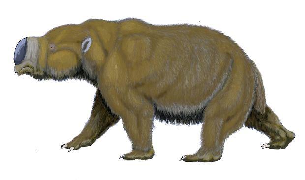 Diprotodon opatutum