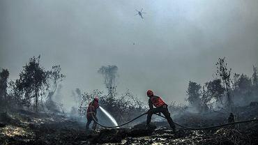 Strażacy walczą z pożarem lasu w okolicach Kampar, indonezyjska prowincja Riau