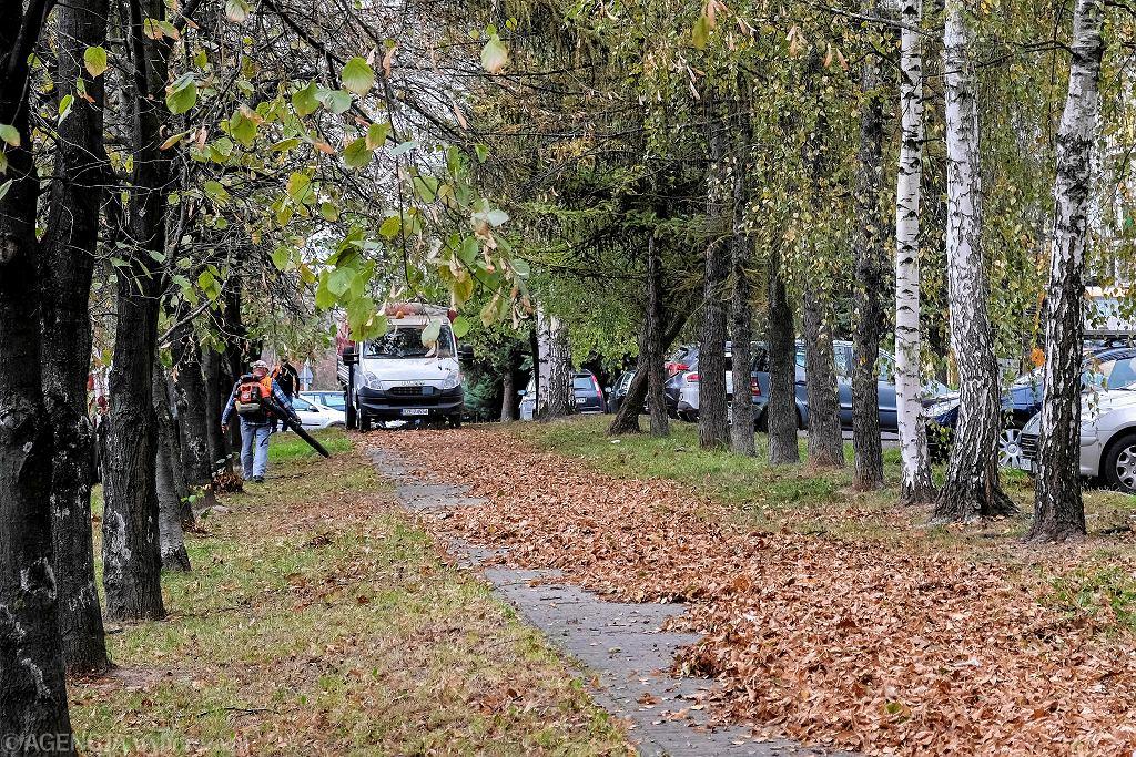 Listopad 2019 r. Ogrodnicy sprzątają liście w parku w Rzeszowie za pomocą dmuchaw