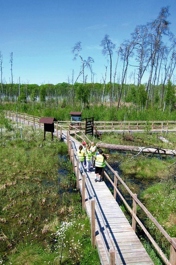 Niedaleko Parczewa przebiega szlak 'Bobrówka' - kilkukilometrowa ścieżka edukacyjna zbudowana nadrewnianych kładkach