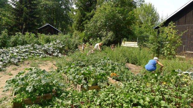 Ogród Społecznościowy Motyka i Słońce