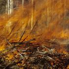 Lasy otwarte tylko na chwilę? Rekordowa susza może oznaczać nowe zakazy