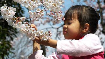 Japonia Tokio - park Ueno / Shutterstock