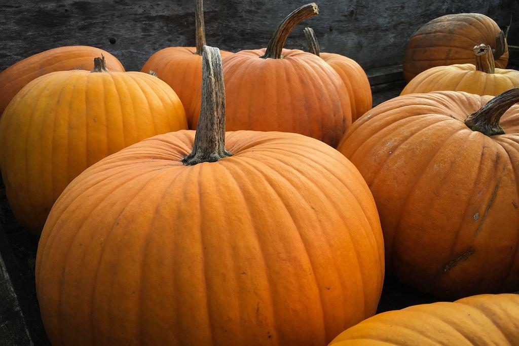 Czy 6 października to niedziela handlowa? (zdjęcie ilustracyjne)