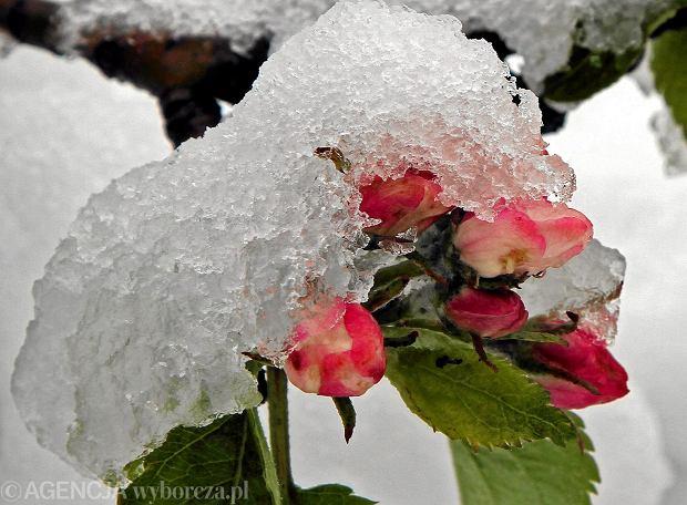 Wczesna Zima Aktualne Wydarzenia Z Kraju I Zagranicy