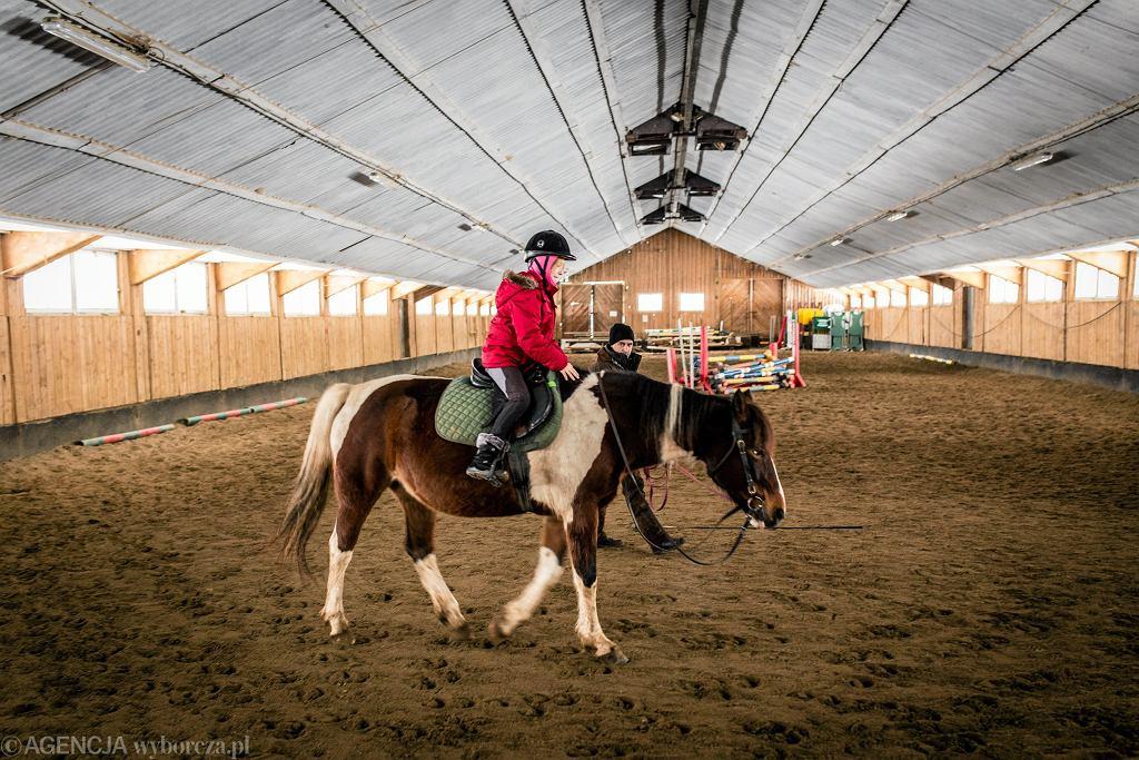 Stadnina koni huculskich w Regietowie (zdjęcie ilustracyjne)
