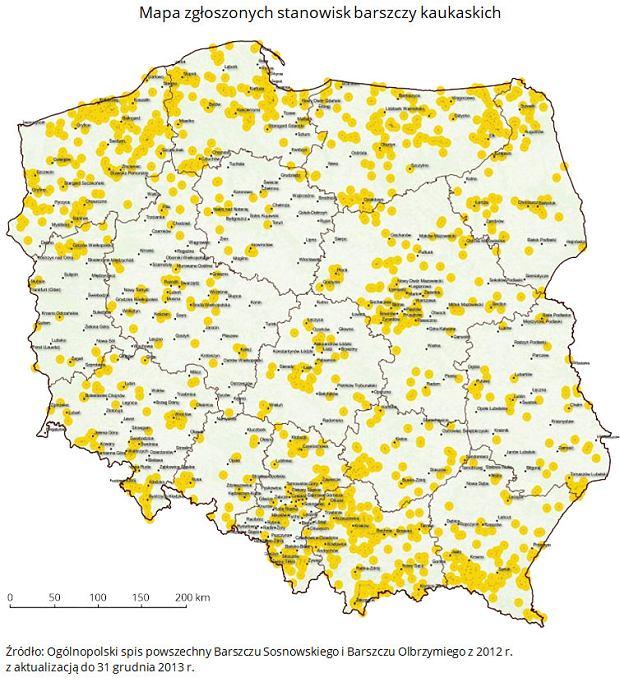 Mapa zgłoszonych stanowisk barszczy kaukaskich w Polsce.