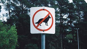 Czy zakaz wyprowadzania psów jest legalny?