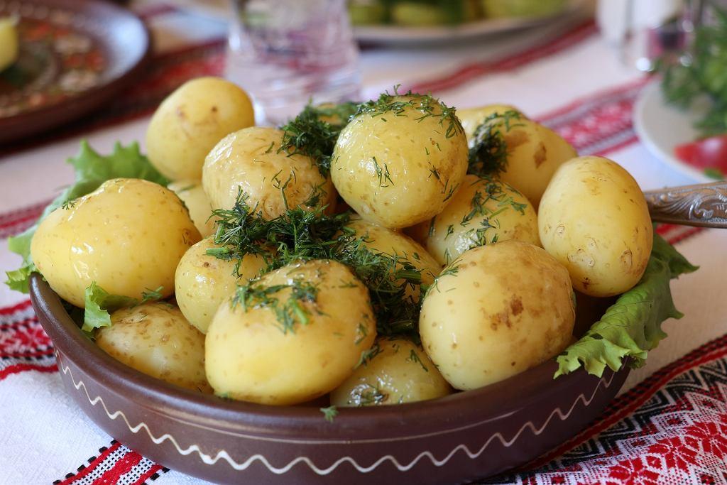 młode ziemniaki, zdjęcie ilustracyjne
