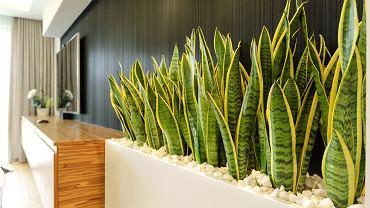Sztuczne rośliny to świetna dekoracja mieszkania, która nie wymaga pielęgnacji