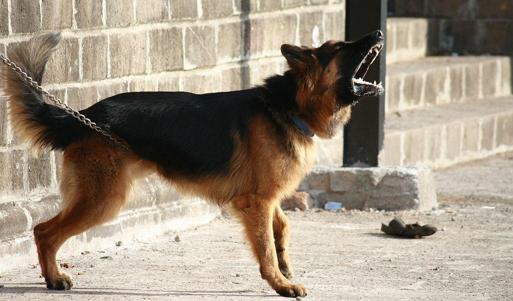 Od teraz w Nowosybirsku psy i koty nie mogą 'dawać głosu' nocą