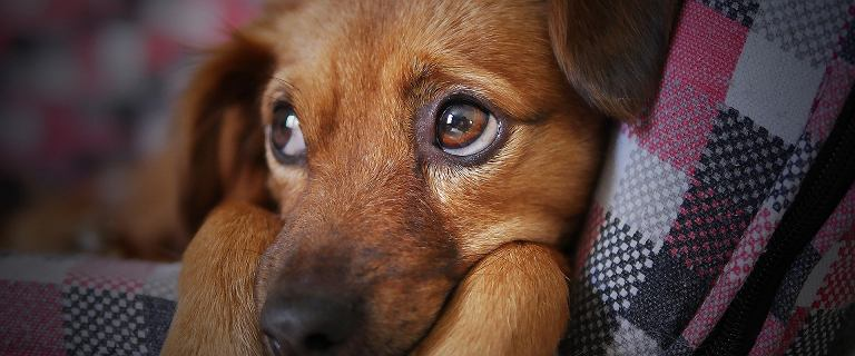 Podatek od posiadania psa 2020. Ile zapłacimy za ukochanego pupila?