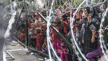 Migranci na granicy pomiędzy Serbią a Węgrami w okolicach miasta Horgos, 16 września 2015 r.