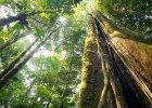 Drzewa potrafią wzywać deszcz, rozmawiać ze sobą, a nawet podróżować. 7 faktów o lasach, o których nie miałeś/aś pojęcia! [ZDJĘCIA]