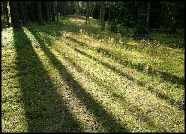 Z robotą jestem w lesie, ale ja lubię las.