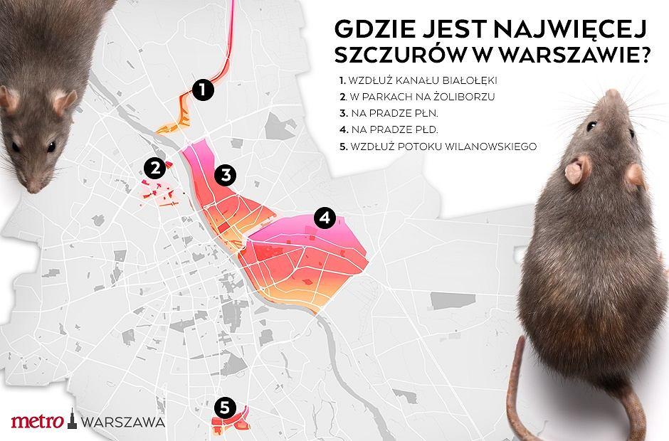 Gdzie jest najwięcej szczurów w stolicy? M.in na Pradze