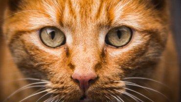 Kocie zasady życia nie są dla każdego (fot. Pexels.com CC0)