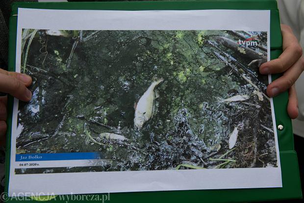 Skażenie rzeki Baryczy, materiały z konferencji Partii Zieloni.