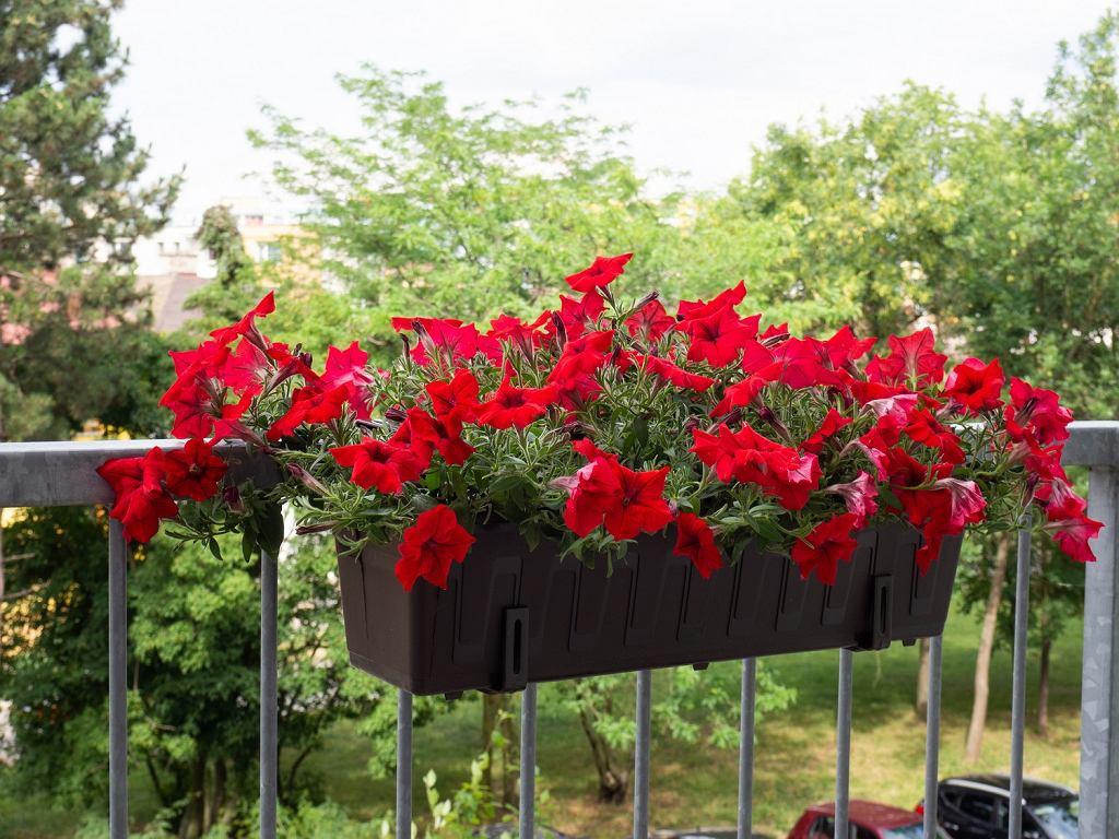 Donice do kwiatów balkonowych