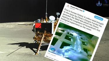 Chiny na Księżycu. Jedno z nasion przywiezionych z Ziemi wykiełkowało