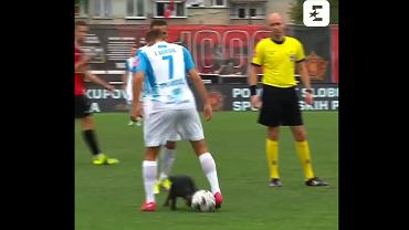 Pies na murawie meczu ligi bośniackiej