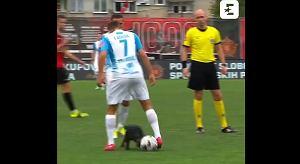 """Pies wbiegł na boisko i został dryblerem! Założył """"siatkę"""" niczym Messi [WIDEO]"""