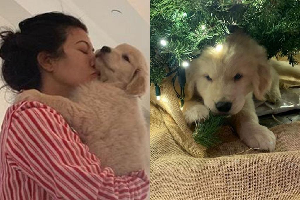 Kourtney Kardashian kupiła dzieciom psa