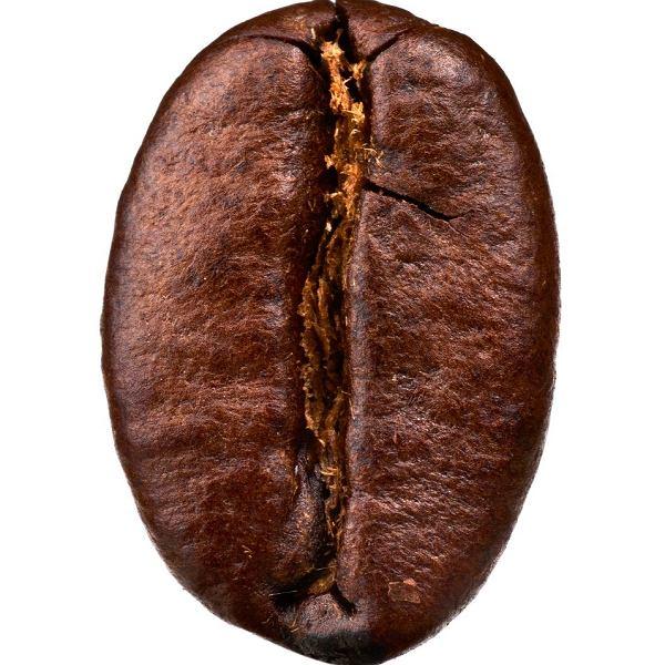 Ziarnko kawy