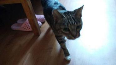 Wraz z panią Elżbietą Bek dom stracił jej kot, którego znalazła zimą przywiązanego do trzepaka. Oboje przebywają teraz w noclegowni.