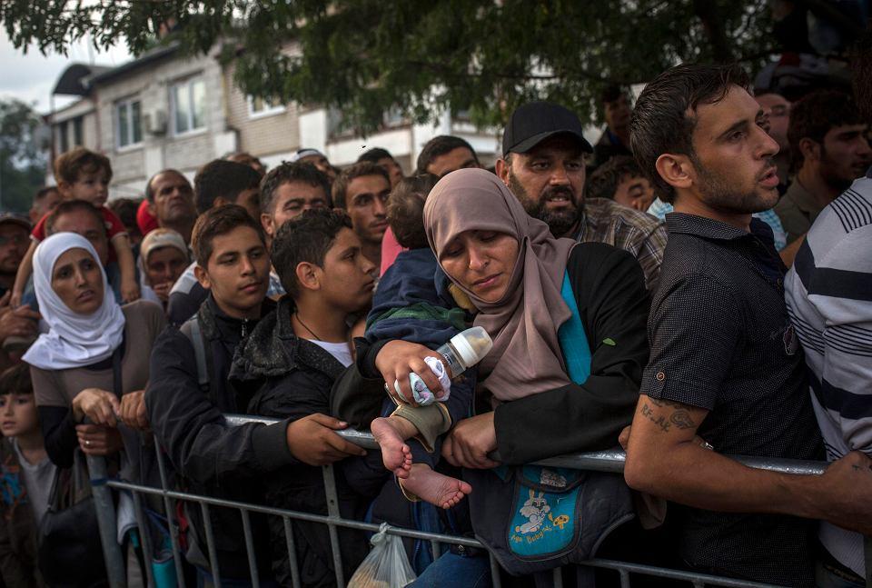 Syryjscy uchodźcy w Serbii