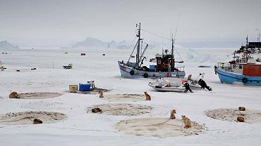 Na zamarzniętym morzu widać brunatne kręgi wydeptane przez psy