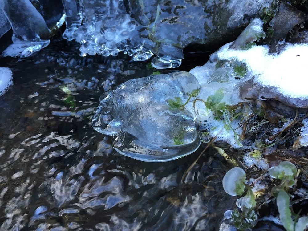 Zimna Zośka, zwana również zimnymi ogrodnikami, to zjawisko klimatyczne, które charakteryzuje się nagłym ochłodzeniem. Dlatego niektórzy ogrodnicy powstrzymują się z sadzeniem roślin do 16 maja - dniem po Zimnej Zośce