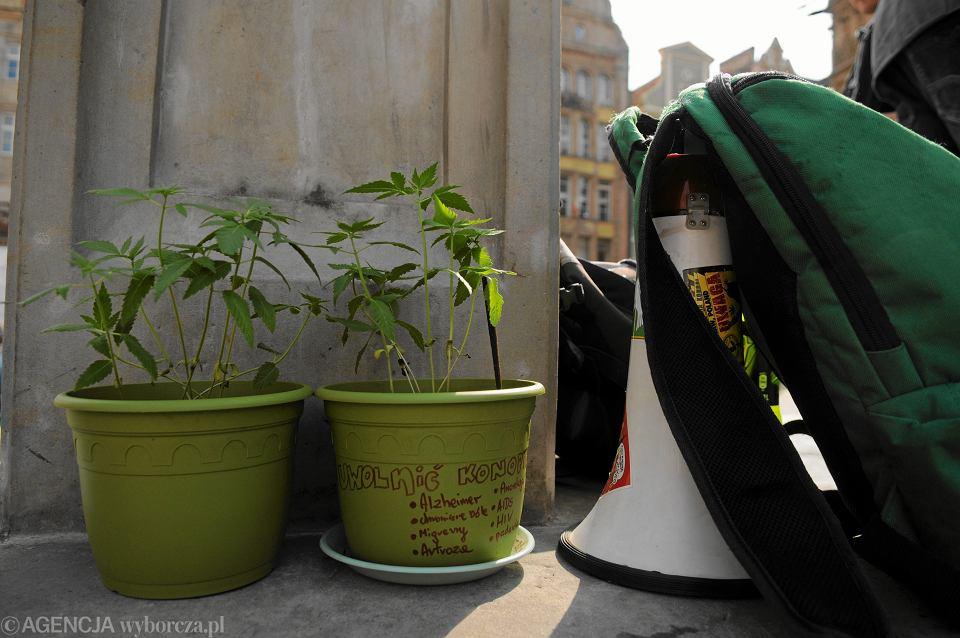 Marihuaną nie będą już - jak do tej pory - 'kwiatowe lub owocujące wierzchołki konopi', lecz 'każda naziemna część rośliny'. To trochę tak, jakby ważyć jabłka razem  z pniami i gałęziami!