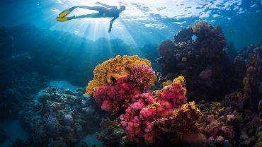 W Dubaju ma powstać rafa koralowa o powierzchni 500 tys. metrów kwadratowych (zdjęcie ilustracyjne)