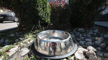 Miski z wodą dla zwierząt w centrum Kielc