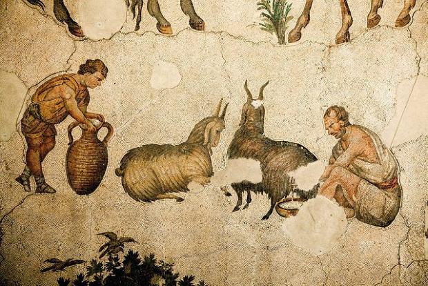 Pasterze dojący kozy (VI w.); Muzeum Mozaiki wStambule