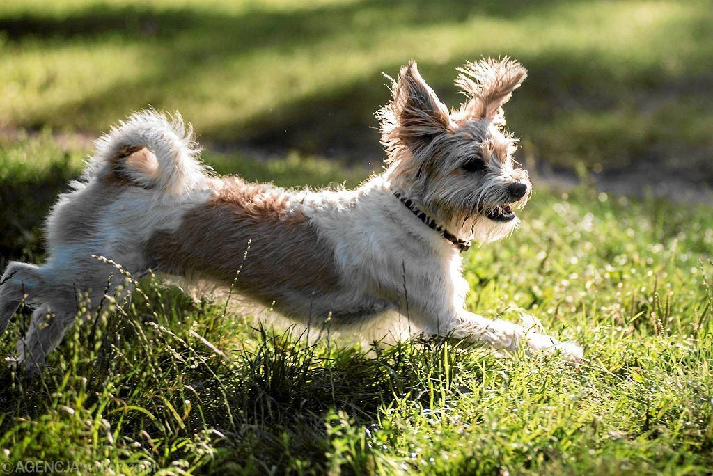 Nieupilnowanie Psa Mandat Straż Miejska Może Ukarać Za