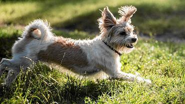 Mandat za nieupilnowanie psa