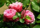 Kwiaty do ogrodu. Wybieramy najpiękniejsze kwiaty