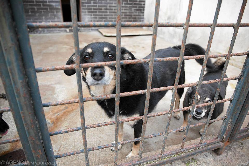 Stowarzyszenie Przyjaciół Zwierząt 'AS' Animals Security z Ustronia ratuje psy i koty