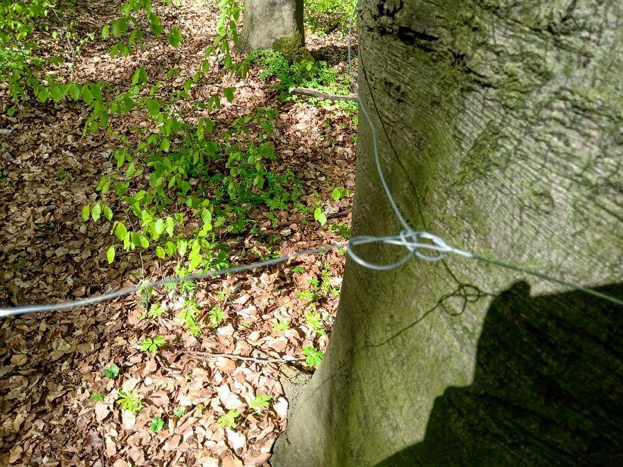 Chęciny. Policjanci zabezpieczyli linki rozciągnięte między drzewami