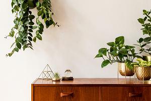 Kwietniki - modne wyposażenie domu, które wystylizuje rośliny
