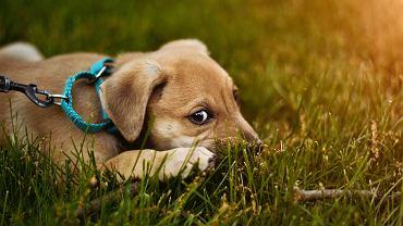 USA: Farmer znalazł w polu ciało zabitego psa. Obok leżała pluszowa zabawka (zdjęcie ilustracyjne)