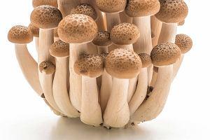 Kombucha, grzyby, drożdże, konopie - o tych składnikach kosmetycznych jest teraz najgłośniej. Dlaczego?