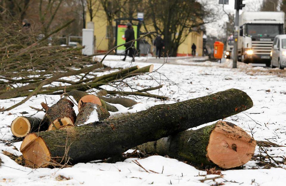 Wycinka drzew przy ul. Chrobrego i Sobieskiego w Toruniu