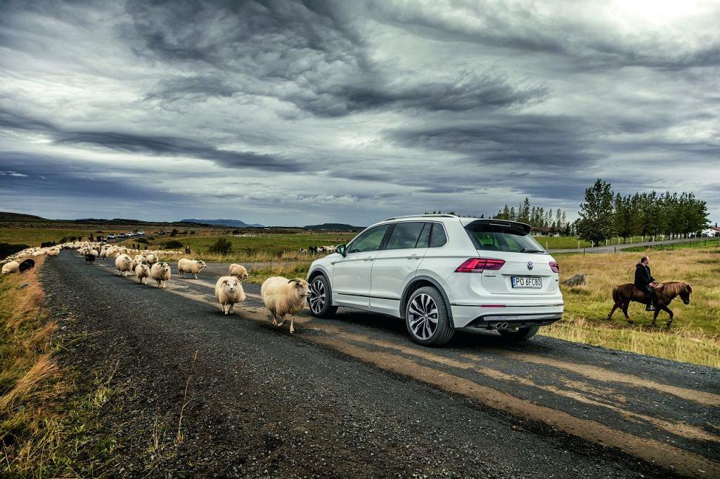 VW Tiguan. Na Islandi jest 340 tys. mieszkańców, 350 tys. zarejestrowanych samochodów i  800 tys. owiec
