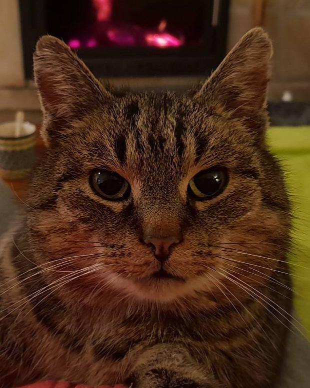 Zdjęcie numer 75 w galerii - Karmel, Daktyl, Kapitan Benny, Ptyś, Wiesław... Kochane i piękne - oto Wasze koty [GALERIA NA DZIEŃ KOTA]
